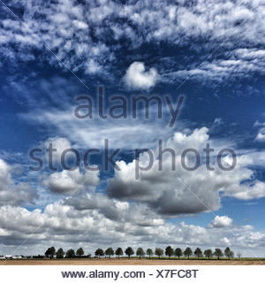 France, Deux Sevres, Landscape with row of trees in distance and cloudscape - Stock Photo