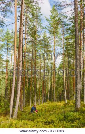 Finland, Keski-Suomi, Jyvaskyla, Man picking berries in pine forest - Stock Photo