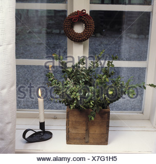 Still-life of green box foliage in old wooden box on windowsill with lighted candle in black candlestick - Stock Photo