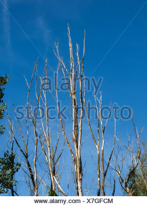 Single old and dead tree branch - Stock Photo