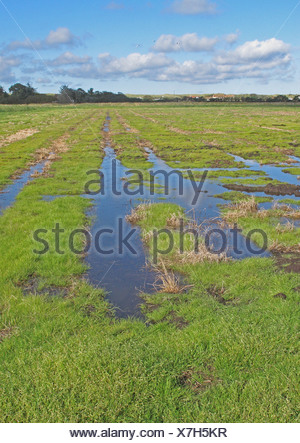 View across newly created 'Higher Level Stewardship' scheme land on former arable field with flooding due to deliberate rise in - Stock Photo