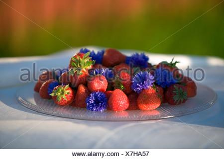 Strawberries, Fejan, Stockholm archipelago, Sweden.