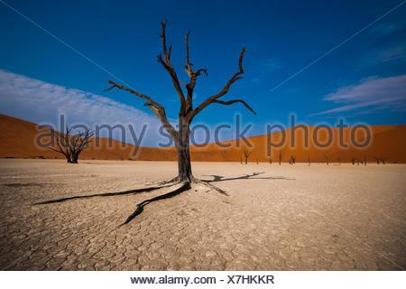 Namibia, Hardap Region, Namib Naukluft National Park, Sossusvlei, Deadvlei