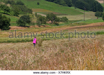 hat hay turn meadow shine shines bright lucent light serene luminous sunny - Stock Photo
