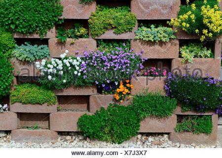 Mauer mit bluehenden Blumen, Mauerwerk mit Aussparungen fuer Blumen - Stock Photo