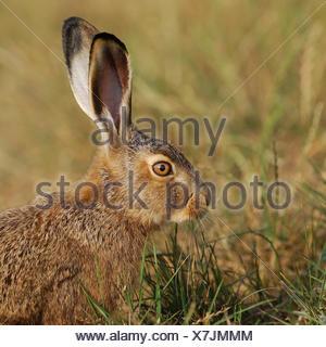 profile animal green - Stock Photo