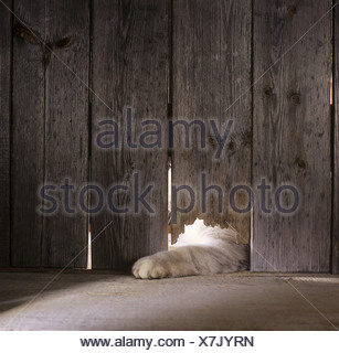 cat in woodshed - Stock Photo