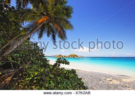 USA, Virgin Islands, St John, Trunk Bay, Palm shaded Caribbean Beach - Stock Photo