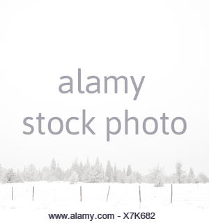 USA, Wyoming, Albany County, Laramie, Snow covered forest - Stock Photo