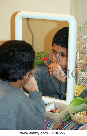 Reflection in a mirror of a young boy feeds a parrot on his shoulder - Stock Photo