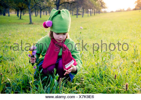 Germany, Baden-Wuerttemberg, little girl with picked flowers crouching on a meadow - Stock Photo