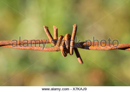 Rusty barbed wire fence - Stock Photo