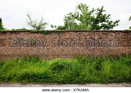 Brick wall and plants - Stock Photo