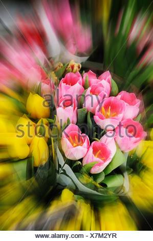 Bunch of tulips (tulipa), close up - Stock Photo
