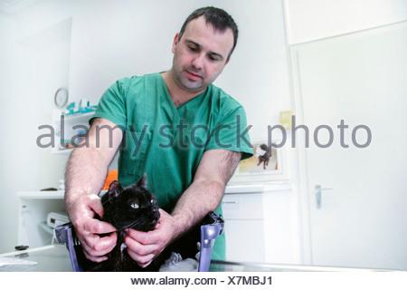 Vet examining a cat - Stock Photo