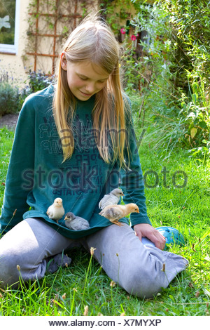 domestic fowl (Gallus gallus f. domestica), girls playing with hen's chicks in the garden, Germany - Stock Photo