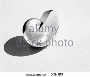 Metal shell - Stock Photo
