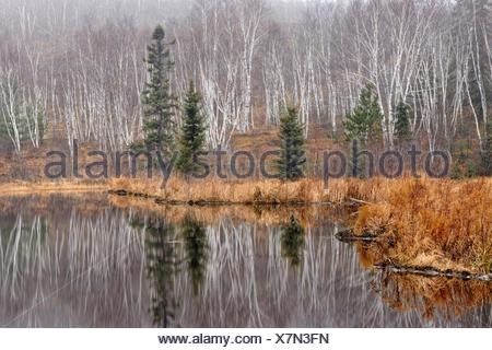 Reflections in a beaverpond in late autumn. - Stock Photo