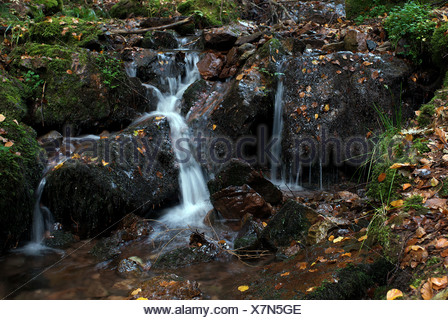 Tabarz, Germany - An autumn creek in the Thuringian Forest - Stock Photo