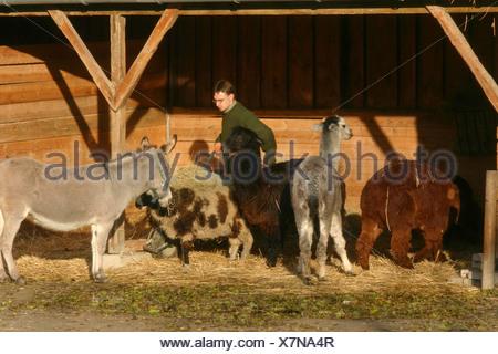 donkey in barn - Stock Photo