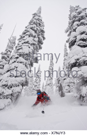 A female skier enjoys fresh snow and wide trees in the backcountry of Fernie B.C - Stock Photo