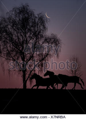 Horse at night under the moonlight, Germany - Stock Photo