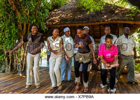 Staff members of the Lebala Safari Camp at the Kwando Concession do a traditional singing and dancing performance, Botswana. - Stock Photo