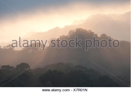 Sunrise View over Jungle Canopy Panama - Stock Photo