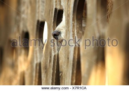 mongrel behind fence - Stock Photo
