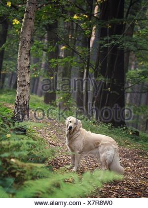 Cute dog in the woods - Stock Photo