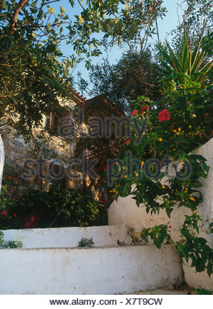 Overgrown branches over steps in front of house, Peloponnese, Greece - Stock Photo