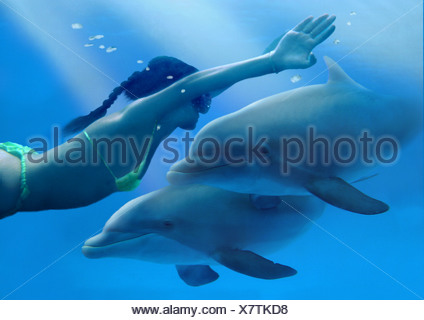 Common Bottlenose Dolphin (Tursiops truncatus). Two individuals with diver - Stock Photo