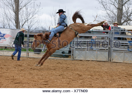 Riding wild horse at Meyhen Rodeo 2006, Thuringia, Germany, Europe - Stock Photo