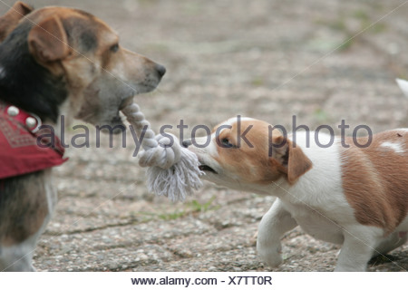 Mother dog playing with her little puppy outside,  teaching puppies outside - Stock Photo