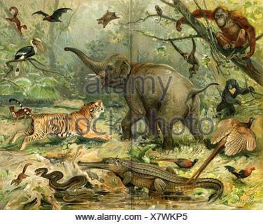 fauna, wild, animals, flora, vintage, image, photo, picture, copy, deduction, - Stock Photo