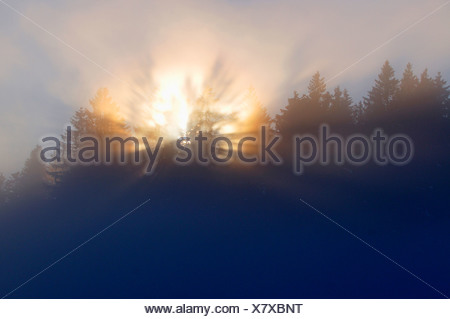sunrise over spruce forest in a foggy morning, Germany - Stock Photo