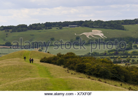 View towards White Lion chalk figure on hillside with start Ridgeway long-distance footpath in foreground Whipsnade viewed from - Stock Photo