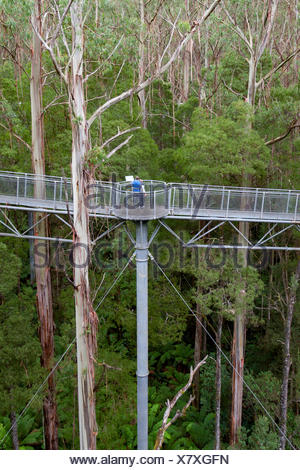 Australia, Barwon South West region, Great Otway National Park, Otway Fly Treetop Walk, Victoria, temperate rainforest - Stock Photo