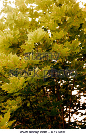 Leaves growing on tree - Stock Photo