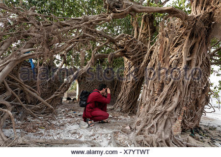 Tourists taking photographs, Tree roots covering the walls of an old house in Elinkine, Casamance, Senegal - Stock Photo
