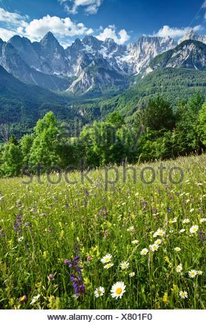 HAY MEADOWS in the Julian Alps. Spiks range near Kranjska Gora. Triglav National Park. Gorenjska. Slovenia - Stock Photo