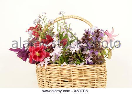 baskets, bugle, akeleien, phlox, gnsel, ajuga reptans, vergiss mein nicht, - Stock Photo