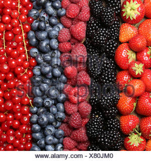 Frische Beeren Früchte wie Erdbeeren, Heidelbeeren, Himbeeren, Johannisbeeren und Brombeeren bilden einen Hintergrund - Stock Photo