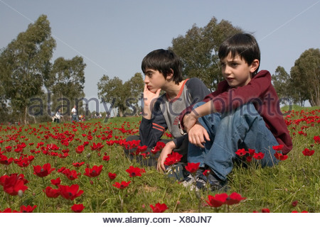 two young boy Admiring the red poppies - Stock Photo