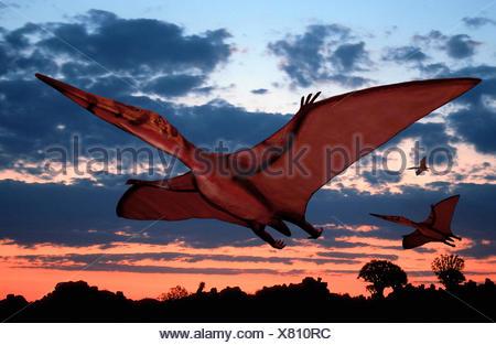 Pterodactylus (Pterodactylus), flying at sunset - Stock Photo