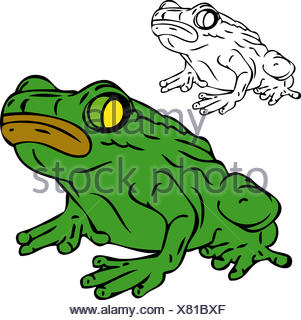 isolated, colour, reptile, illustration, frog, paint, draw, cartoon, close, - Stock Photo