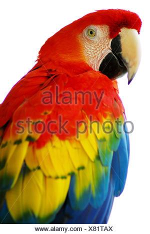 american bird parrots