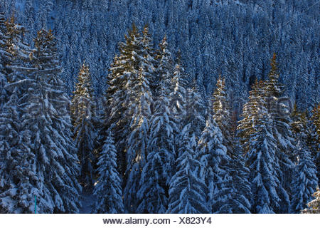 Tree, trees, spruce, spruces, Flumserberge, Flums mountain, mountains, Heidiland, sky, background, pattern, snow, Switzerland, Eu - Stock Photo