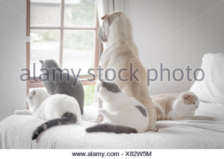 Dog and four cats looking out of window - Stock Photo