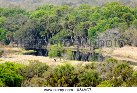 Oak hammock in spring from the Canopy Walk Tower - Stock Photo